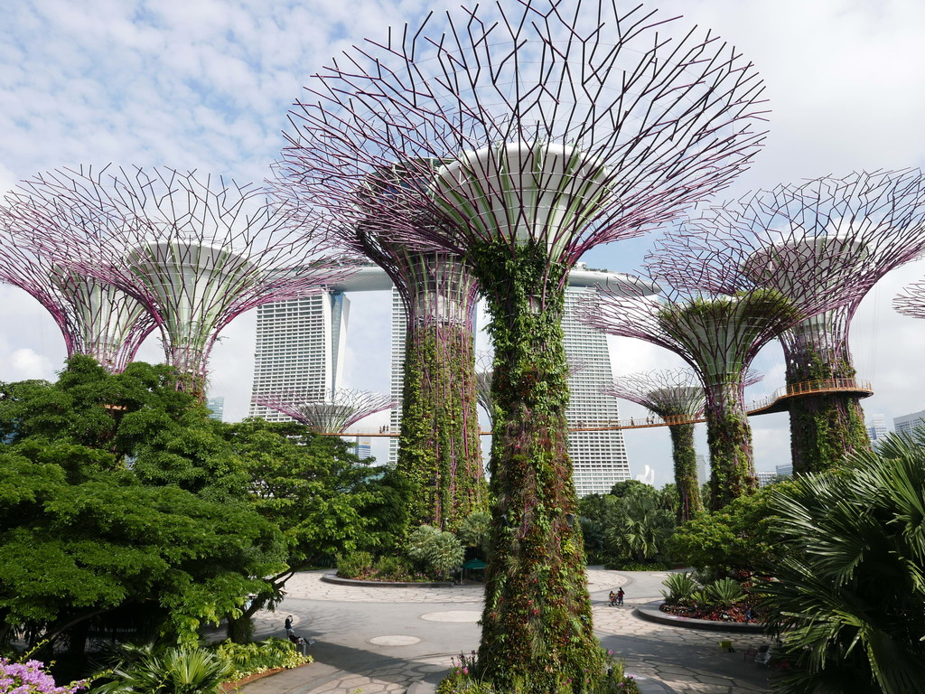 48.Supertrees Singapore